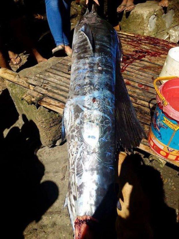 Con cá có hình xăm kì dị mà ngư dân đánh bắt được