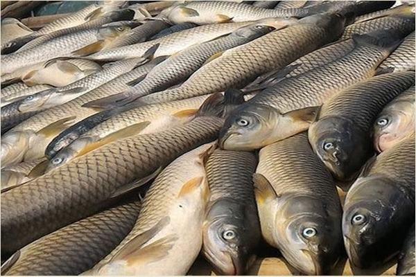 Mỗi giấc mơ chúng ta gặp đều có một ý nghĩa riêng cũng như các con số ngẫu nhiên may mắn ngày hôm đó dành cho bạn. Vậy khi nằm mơ thấy cá đánh số mấy, và điềm báo giấc mơ thấy cá là gì? cùng nghe những chia sẻ của chuyên gia giải mã giấc mơ dưới đây nhé.