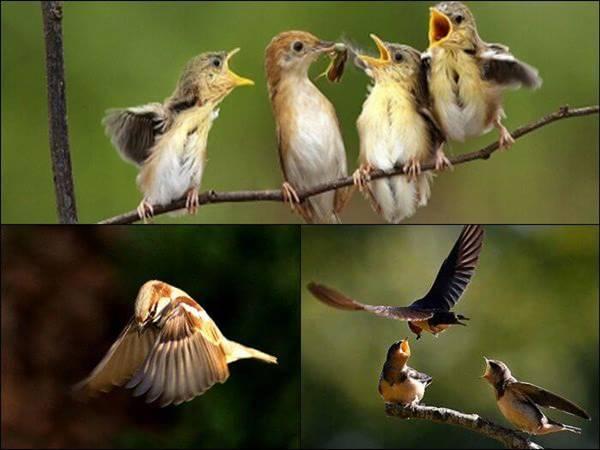 Mơ thấy chim sẻ là điềm báo gì trong tương lai?