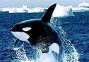 Ngủ mơ thấy cá voi đánh con xổ số nào may mắn