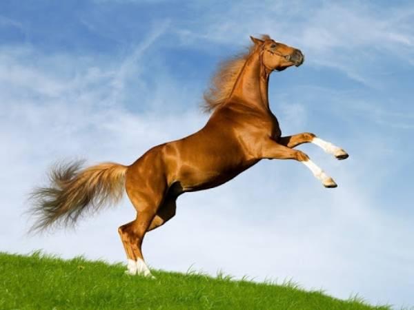 Mơ thấy con ngựa đánh đề con gì? Là điềm hung hay cát